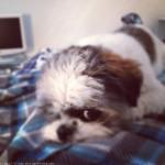 Instagram by Paul Philip Abrigo 2012 1